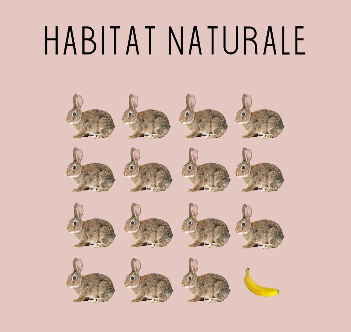 Habitat_Locandina_loghi